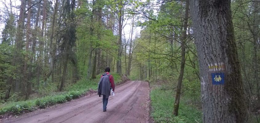 Camino Polaco. Odcinek 4 : Bachotek – Radziki Duże ( 31 km)