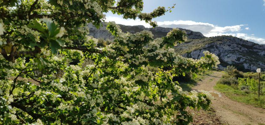 Kwitnące wzgórza Prowansji